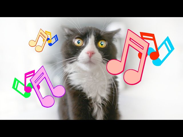 Animal communication The amazing benefits of Music for your stressed pets