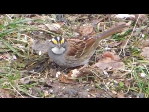 Pennsylvania backyard birds