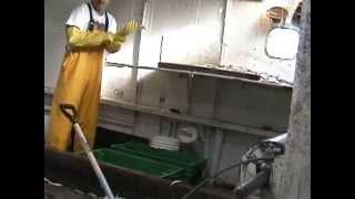 Lake Michigan commercial fishing for smelt
