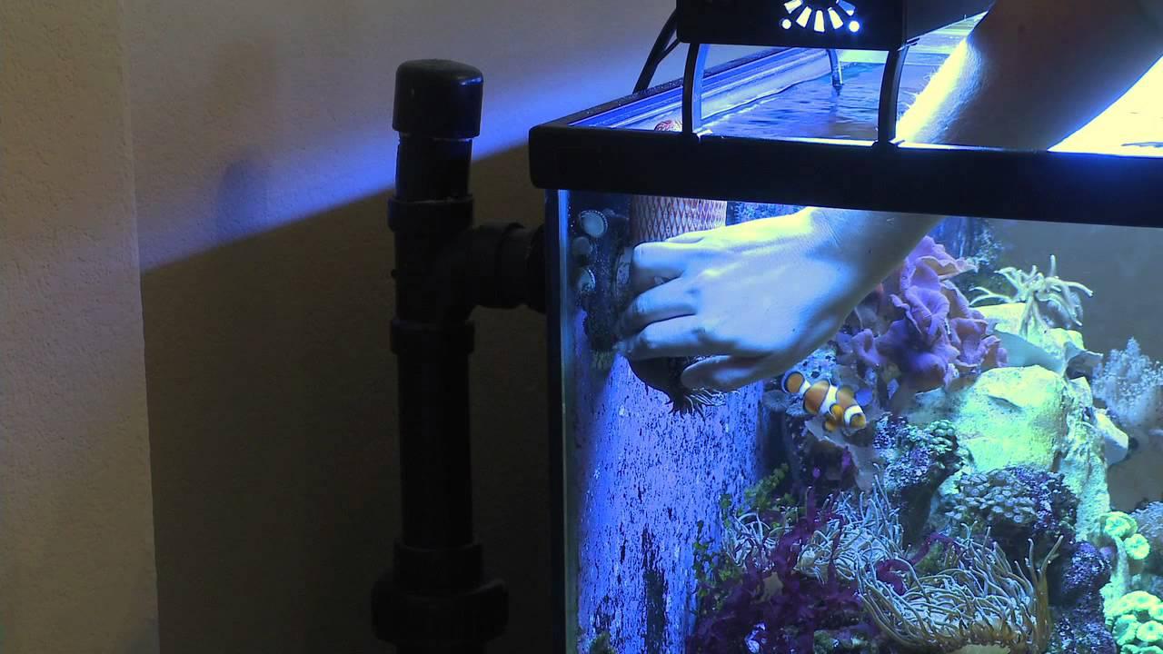 Ananomie Videos how to remove sea anemones