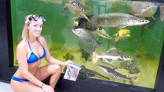 Hand feeding GIANT fish in POOL Aquarium