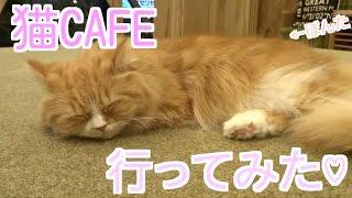 イケてるハーツの新ユウユこと、しむちゃんです♡ 秋葉原にある猫カフェ ...