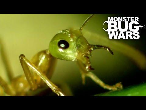 Tree Scorpion Vs Green Ants | MONSTER BUG WARS