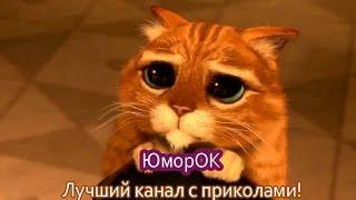 Найден кот из Шрека | ЮморОК