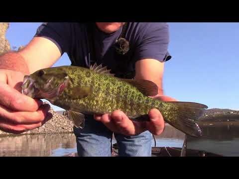 Prineville Reservoir bass part #1