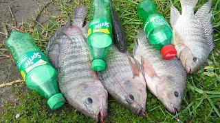 INCREÍBLES PESCAS con BOTELLAS DE PLÁSTICO - Plastic Bottle Fishing - Fish Trap in Cambodia Method