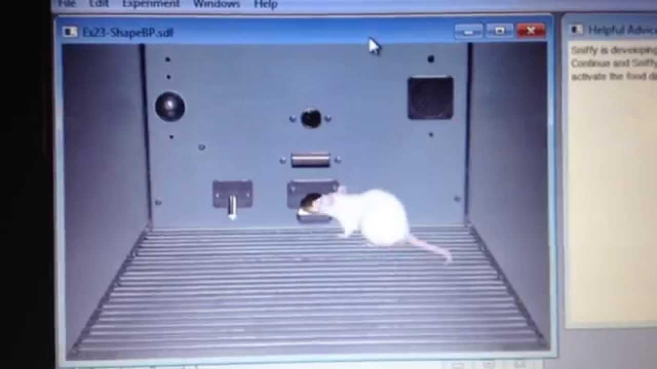 sniffy la rata virtual.pro version 2.0