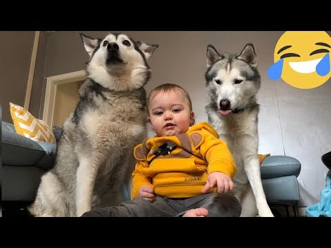 FUNNY HUSKY AND BABY CHALLENGE!! [TRY TO RESIST!!]