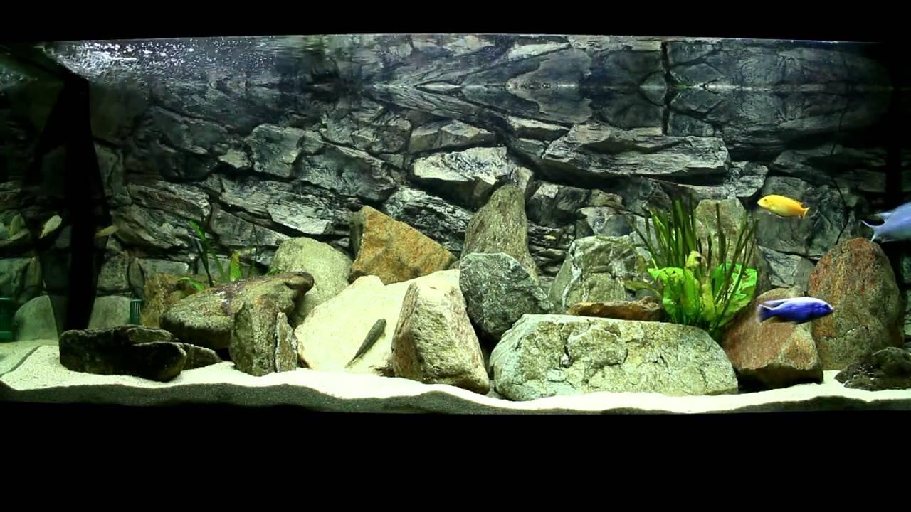 my juwel rio 400 liter malawi cichlids fishtank hd youtube. Black Bedroom Furniture Sets. Home Design Ideas