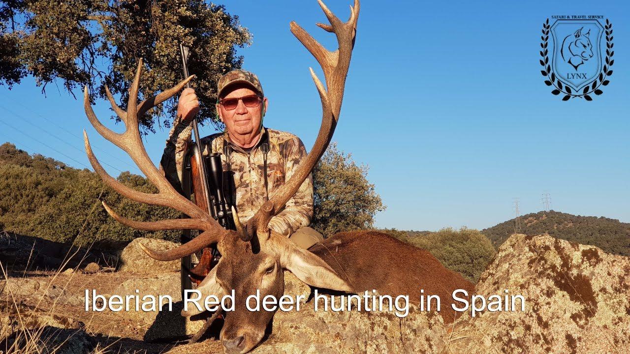 #Red deer hunting in Spain Europe by www.lynx.tours