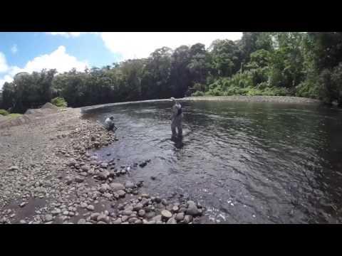 Pez Bobo Sarapiquí - Costa Rica