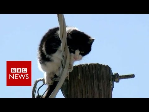 Cat stuck up pole draws huge audience - BBC News