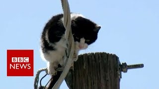 Cat stuck up pole draws huge audience - BBC News
