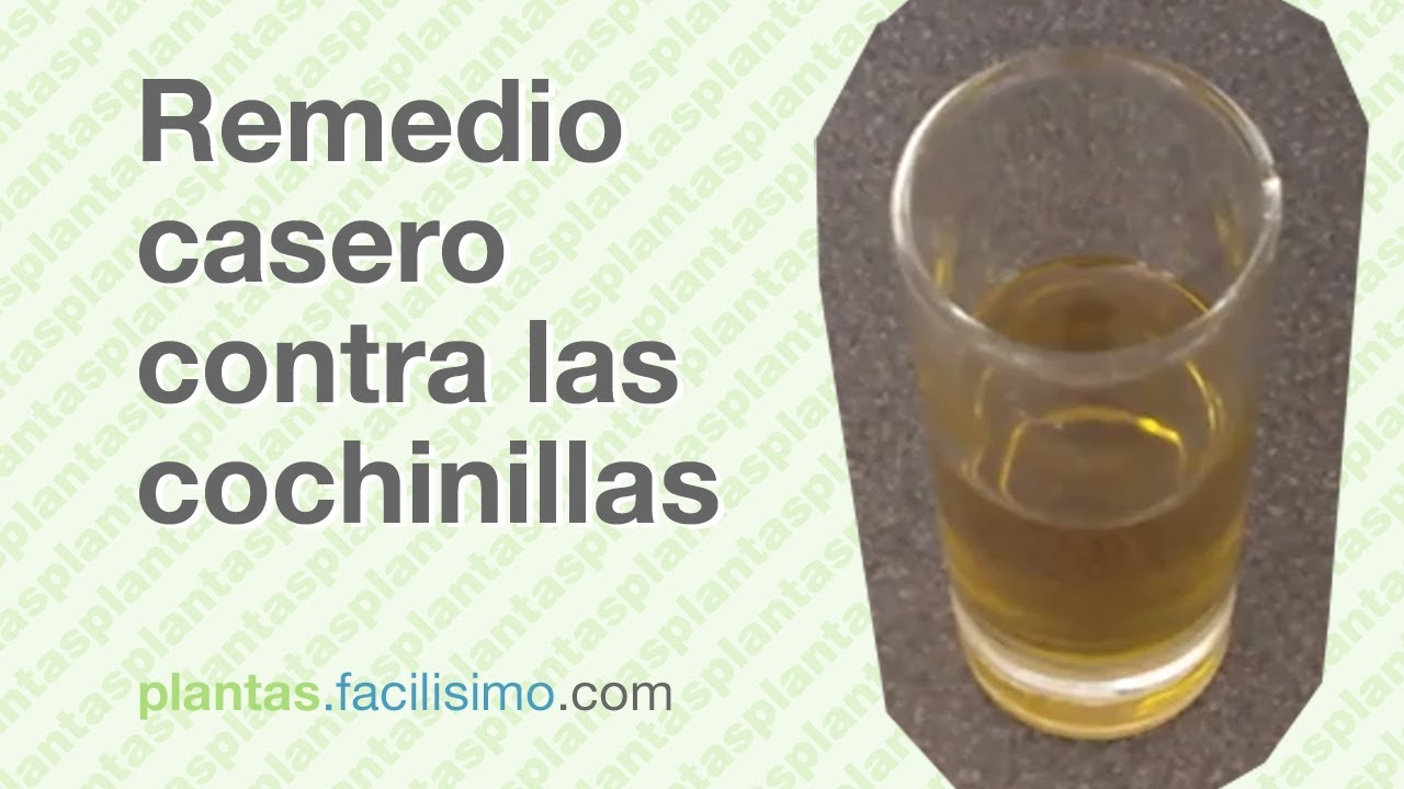 Remedio casero contra las cochinillas for Eliminar cochinilla algodonosa
