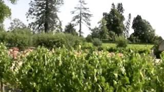 シャトー・カルボニューの葡萄畑の説明20060615 Ch Carbonnieux
