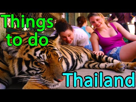 Things to do in Thailand Tigers, Temples and Muay Thai | Travel NFX