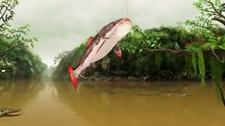 Fishing clash how to get the electric eel.