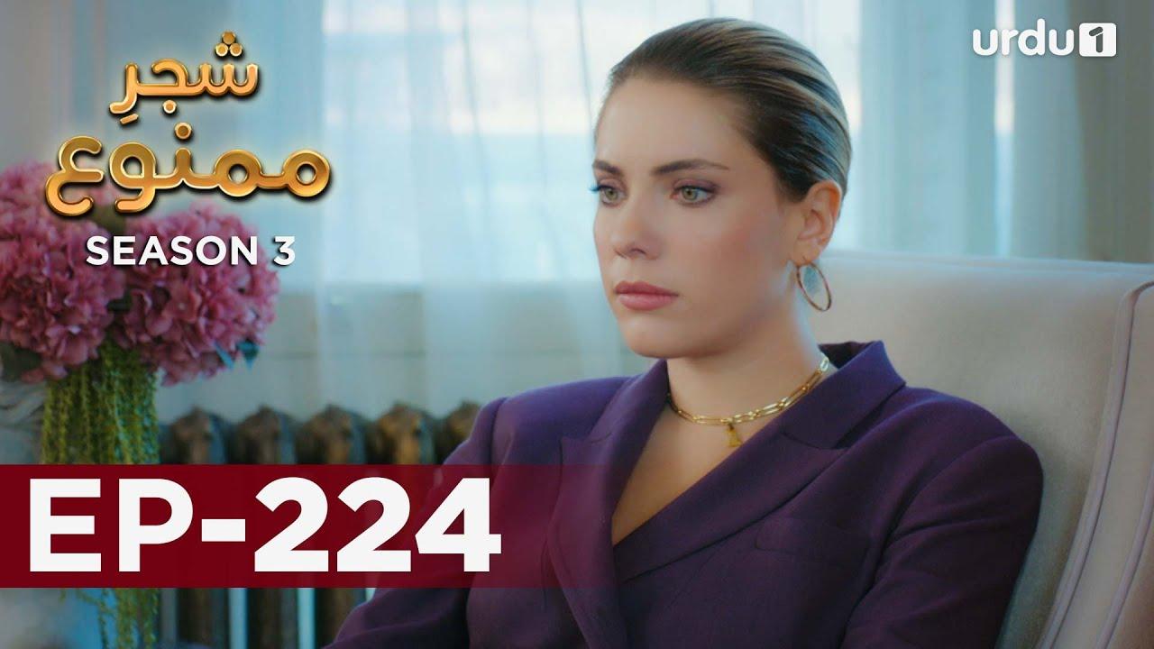 Shajar-e-Mamnu | Episode 224 | Turkish Drama  | Forbidden Fruit | Urdu Dubbing | 19 October 2021