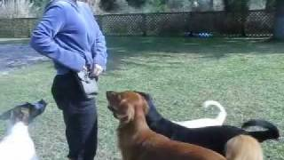Amazing Puppy Tricks, Dog Obedience, Clicker Training
