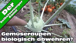 Kohlweißlinge abwehren. Biologischer Pflanzenschutz oder Gemüseschutznetz.