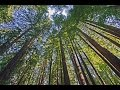 Download 1 Hour Mediation Relaxation Music with HD 1080p visuals - For HDTVs MP3 song and Music Video