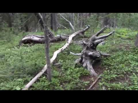 Night Walk With Utah Sasquatch, Foot Prints, Perches, Insane Structures
