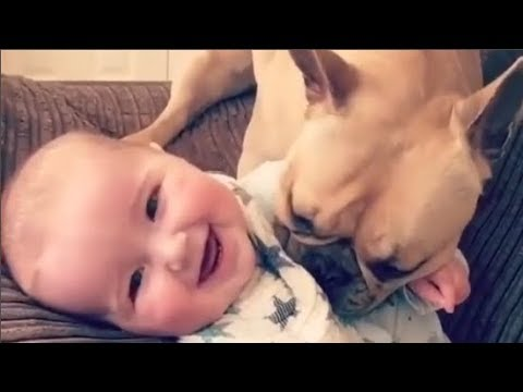 Baby and Dog are Best Friends -  Funny Dogs and Babies Playing Together -  Youtube