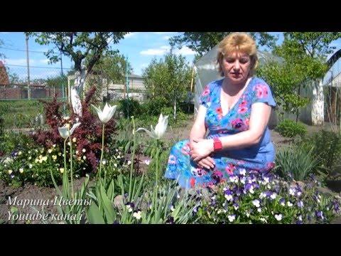 ВИОЛА - выращивание, уход, посадка, полив, размножение. Цветы в саду