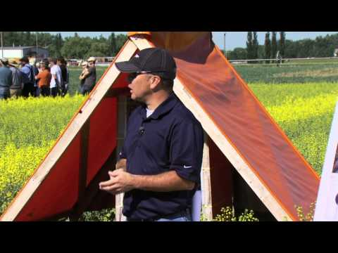 Hybrid Canola Seed Production - Farming Smarter Field School 2011