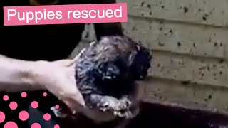 Puppies Rescued After Four Days of Being Stuck thumbnail