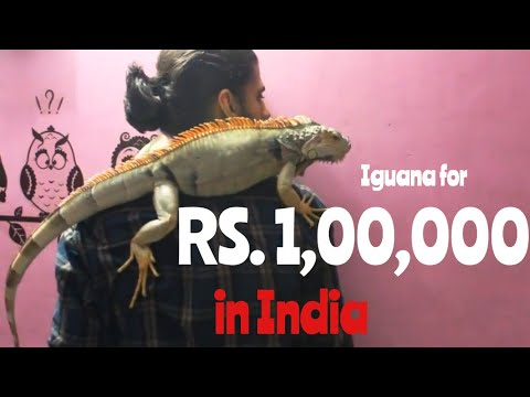 IGUANA for Rs.1,00,000?? | Wildly Indian