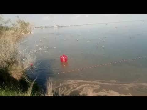 2019 Яровое.Бурсоль розовое озеро.Озеро Тёплый ключ и скорая на пляже.