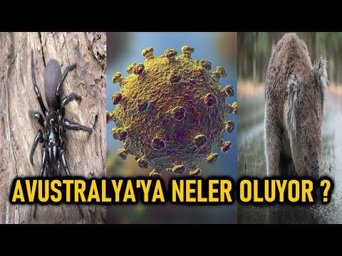 AVUSTRALYA'NIN BAŞINA GELMEYEN KALMADI (Avustralya Örümcek,Corona Virüsü,Sel,Develer,SON DURUM)