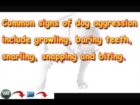 How To Find A Dog Trainer