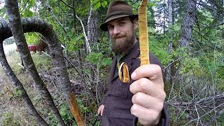 Wild Cherry Bark Medicine Harvesting with Yarrow Willard