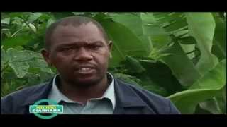 Silage Making  Small Scale Farmers'  Technology