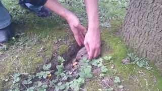 Видео-охота на зайцев. Часть 3. Спасение.
