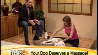 Healing Hands Canine Massage On San Diego Living