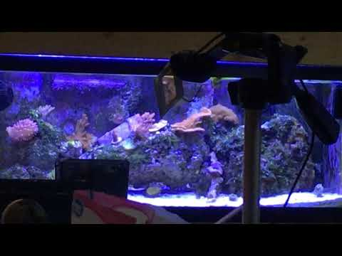 4K Full Daylight Tour of TheLostBegotten's Marine #Fishroom
