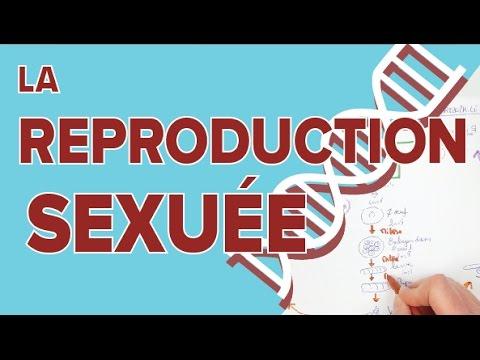 Reproduction Sexuee Et Stabilite De L Espece 1 Svt Terminale S Mathrix Youtube