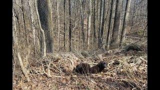 Услышав непонятные звуки в лесу, они даже не подозревали, что спасут сразу 5 жизней