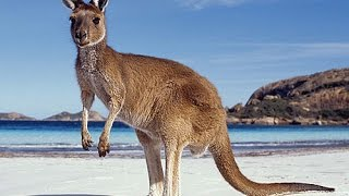 Природа  Южной  Австралии