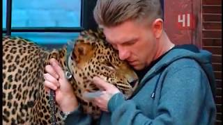 Ручной леопард Цезарь / Новости
