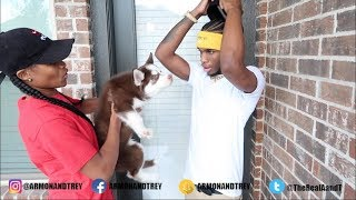 surprising little brother with a dog