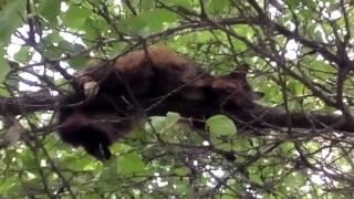 Кот или кошка лежит и спит на дереве (серия 2)