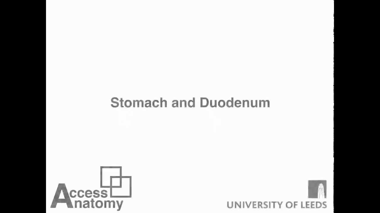 Stomach and Duodenum - YouTube