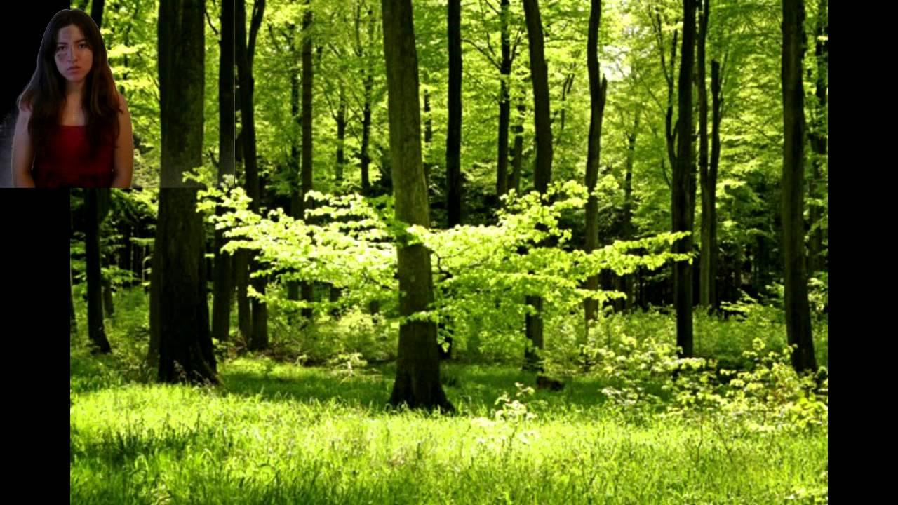 bosques templados  YouTube