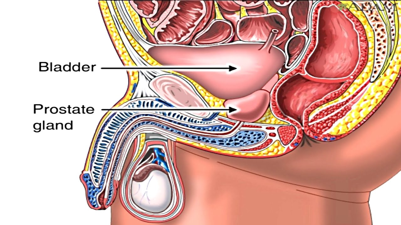 enlarged prostate gland benign prostatic hyperplasia animation symptoms and treatment of bph video youtube [ 1280 x 720 Pixel ]