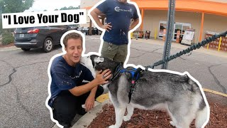 Walking Into Home Depot With A Siberian Husky...