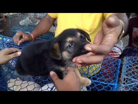 ALSATIAN DOG IN GALIFF STREET